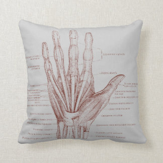 Hand fingers muscles - anatomy cushion