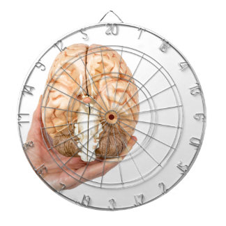 Hand holds model human brain on white background dartboard