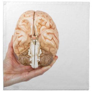 Hand holds model human brain on white background napkin