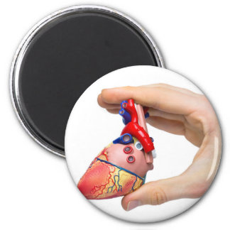 Hand holds model human heart between fingers magnet