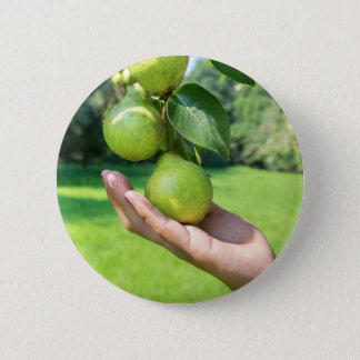Hand showing branch with hanging green pears 6 cm round badge