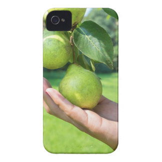 Hand showing branch with hanging green pears Case-Mate iPhone 4 cases
