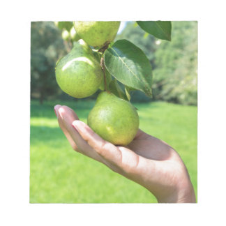 Hand showing branch with hanging green pears notepad