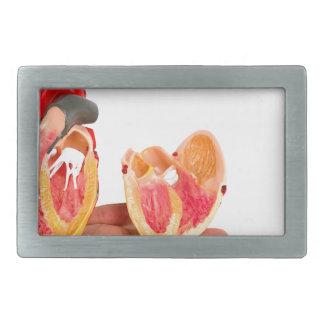 Hand with human heart model on white background.jp rectangular belt buckle
