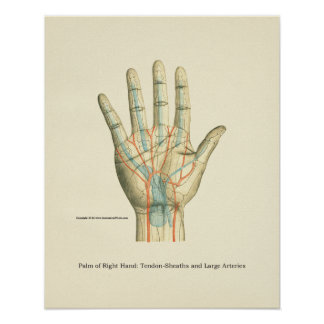 Hand & Wrist Internal Anatomy Poster