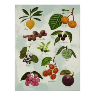 Handpainted Exotic Filipino Tropical Fruits Poster