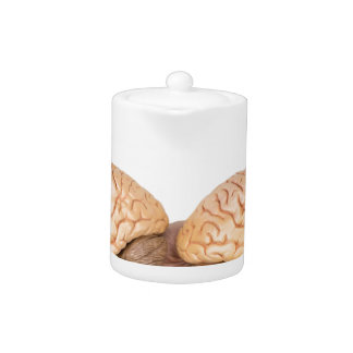 Hands holding model human brain on white