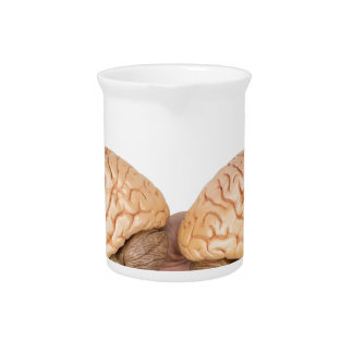 Hands holding model human brain on white pitcher