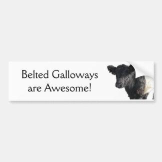 Handsome Belted Galloway Steer Bumper Sticker