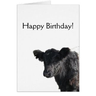 Handsome Belted Galloway Steer Card