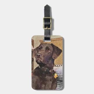 Handsome Chocolate Labrador Retriever Luggage Tag