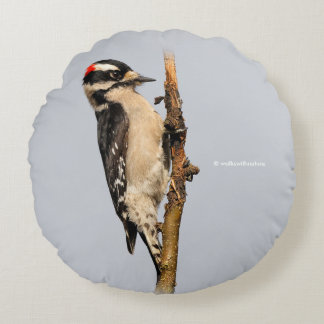 Handsome Downy Woodpecker on the Pear Tree Round Cushion