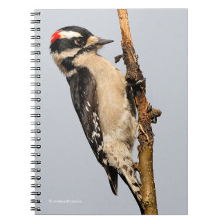 Handsome Downy Woodpecker on the Pear Tree Spiral Notebook