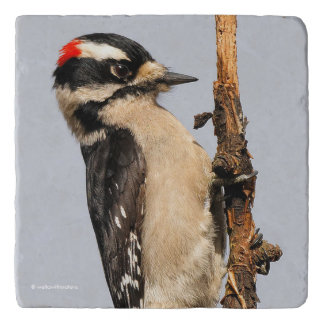 Handsome Downy Woodpecker on the Pear Tree Trivet