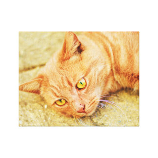 Handsome Ginger Cat Stretched Canvas Print