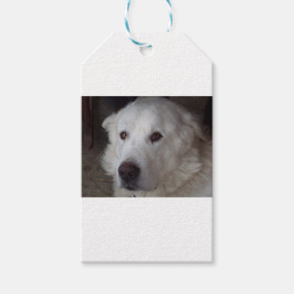 Handsome Great Pyrenees Dog Gift Tags