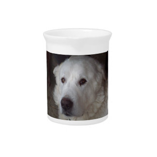 Handsome Great Pyrenees Dog Pitcher