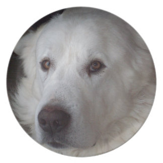 Handsome Great Pyrenees Dog Plate