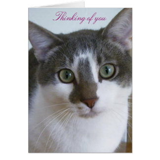 Handsome Grey and White cat-Thinking of You Card