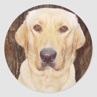 Handsome Lab Classic Round Sticker