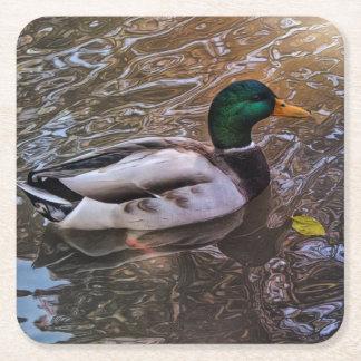 Handsome Mallard Duck Coasters