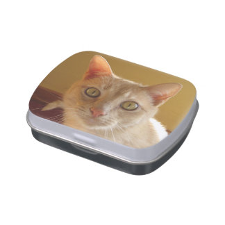 Handsome Orange Cat Candy Tin