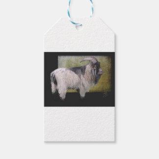 Handsome pygmy goat