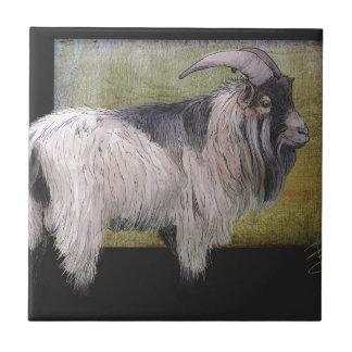 Handsome pygmy goat ceramic tile