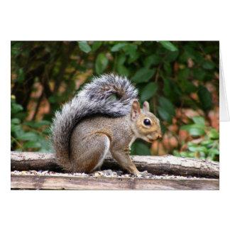Handsome Squirrel Card