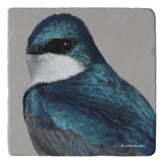 Handsome Tree Swallow: Bird on a Wire Trivet