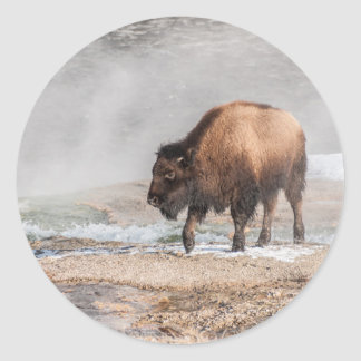 Handsome Young Bison or Buffalo Round Sticker