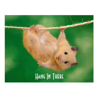 Hang In There Hamster Postcard