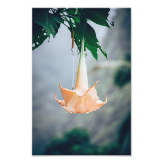 Hanging Flower | Photo Print
