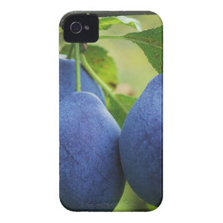 Hanging Fruit Case-Mate iPhone 4 Cases