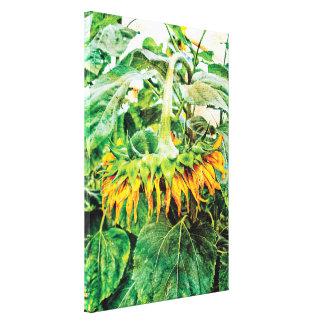 Hanging Giant Yellow Sunflower Textured Grunge Art Canvas Print