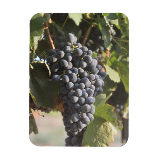 Hanging Grapes Rectangular Photo Magnet
