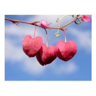Hanging_hearts flower  postcard