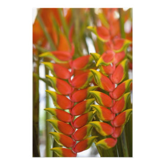 Hanging Heliconia, Weekly Tuesday fruit & Photo