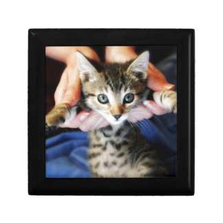 Hanging Out Tabby Gift Box