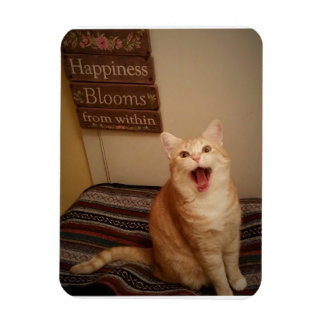 Happiness Blooms...Cat Magnet