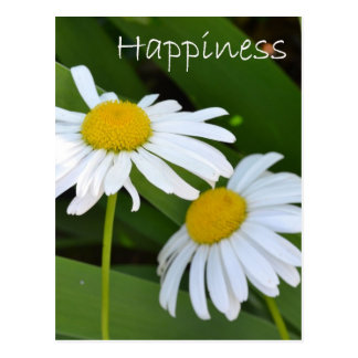 Happiness Daisies Postcard