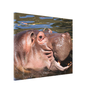 Happy African Hippo in water Canvas Print