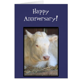 Happy Anniversary white cow greeting card