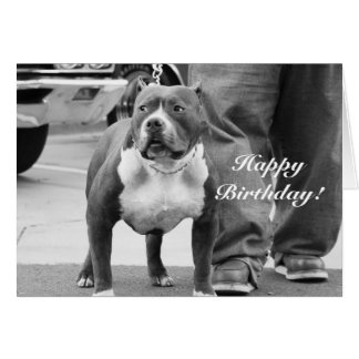 Happy Birthday American Staffordshire Terrier Card