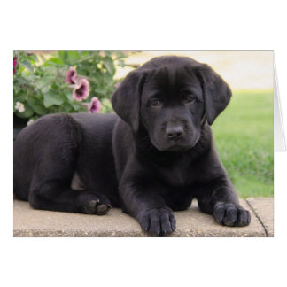 Happy Birthday Black Labrador Retriever Puppy Dog Card