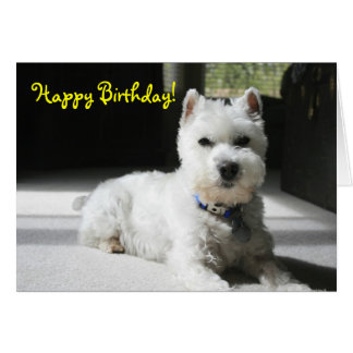Happy Birthday, Blank, Mini Schnauzer Card