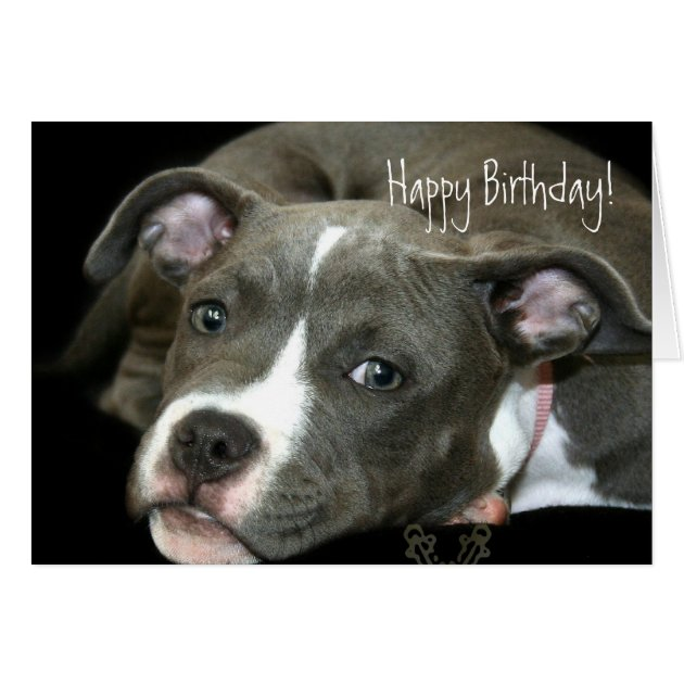 Happy Birthday Pitbull Card happy birthday pitbull greeting cards ...