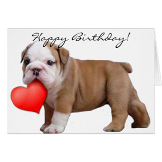 Happy Birthday  Bulldog puppy greeting card