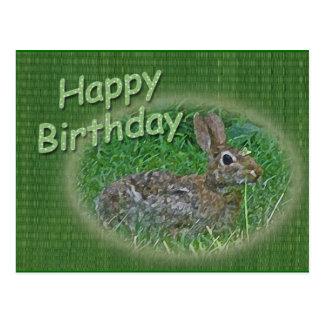 Happy Birthday Bunny Rabbit Cordinating Items Postcards
