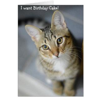 Happy Birthday Card: Cat wants Birthday Cake Card